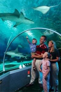 moa_aquarium