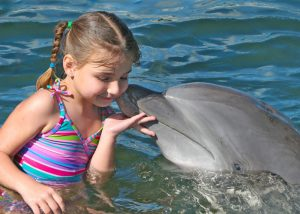 dolphin kisses child at dolphin research center in marathon