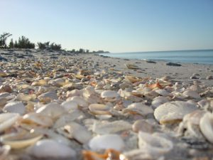shells on the beach on Captiva Island