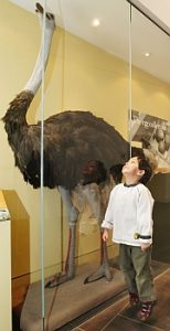 photo: Delaware Museum of Natural History