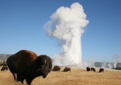 Fall Family Trips to Yellowstone National Park