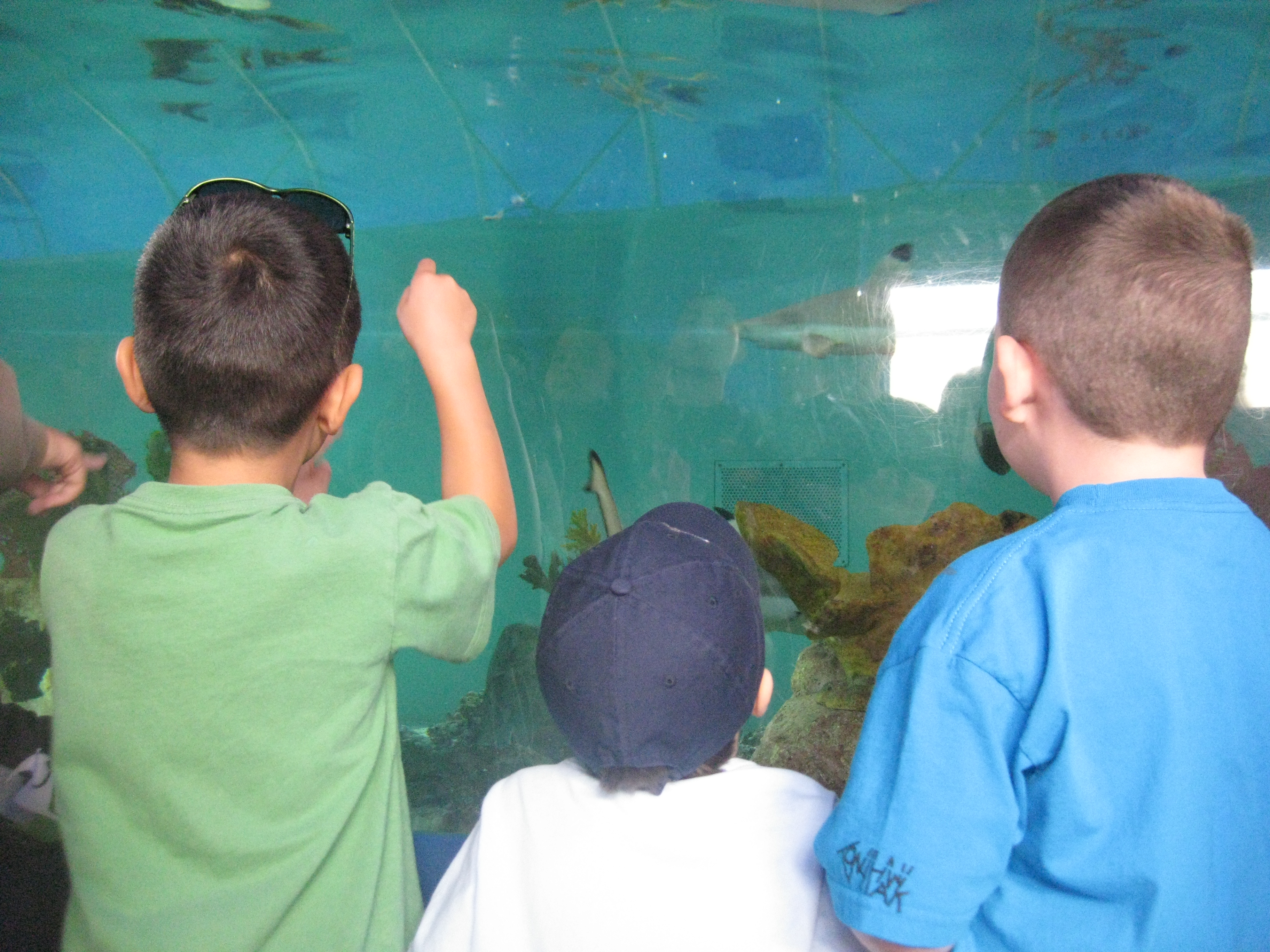 Birch Aquarium is an Affordable Must-See Family Attraction in San Diego