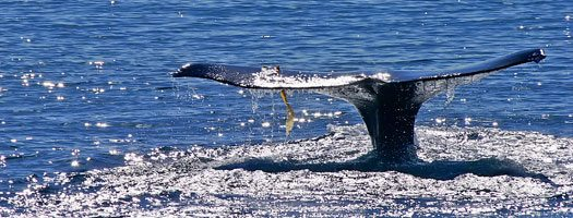 Take the Kids Gray Whale Watching for a Memorable Family Trip