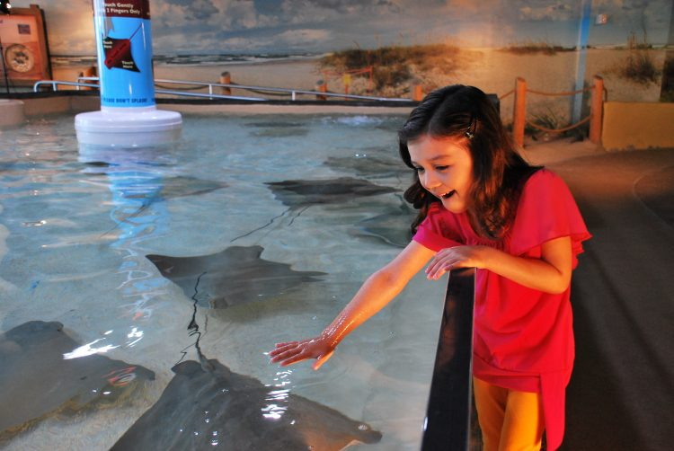 photo courtesy Florida Aquarium - Stingray beach touch pool