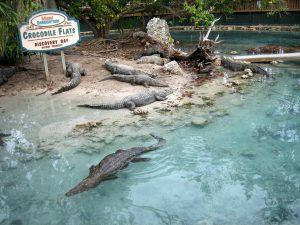 Crocodile Flats at Miami Seaquarium in Miami, FL. Photo by Steph Wiestling of BestKidFriendlyTravel.com