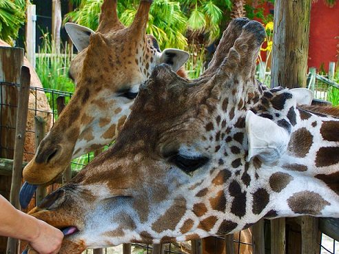 Spring Break Family Activities: Tampa Lowry Park Zoo