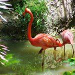 flamingos lowry park zoo sm