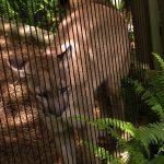 florida panther lowry park zoo sm
