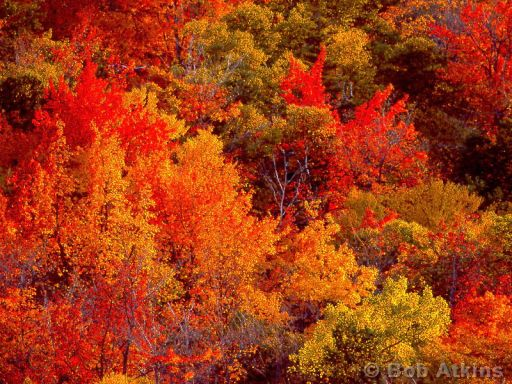 Best New England Fall Family Vacation Activities