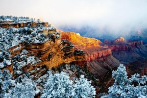 grand canyon with snow covered trees