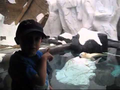 4 Yr Old Reviews Sea World in San Diego