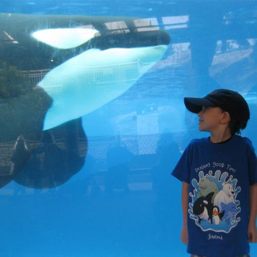 4 year old with Shamu at SeaWorld