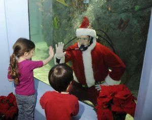 Diving Santa at Mystic Aquarium