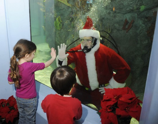 Diving Santa at Mystic Aquarium