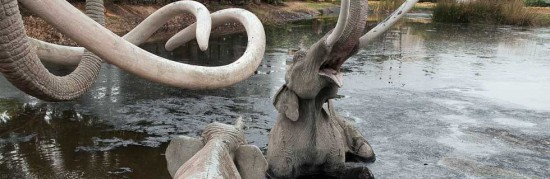 Photo courtesy Page Museum, La Brea Tar Pits
