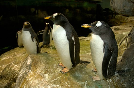 photo courtesy Central Park Zoo