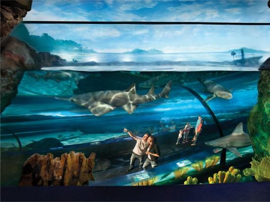 photo courtesy Ripley's Aquarium Myrtle Beach