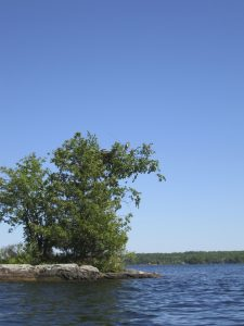 Osprey's nesting on island, Stoney Lake, the Kawarthas