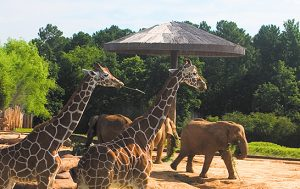 photo courtesy of Caldwell Zoo