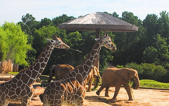 photo courtesy of Caldwell Zoo