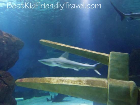 Shark Week SEA LIFE MN Aquarium - photo credit Stephany Wiestling - all rights reserved.