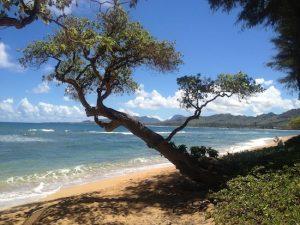 Aston Islander on the Beach, Kapaa, Kauai