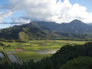 Wetlands and Taro Ponds