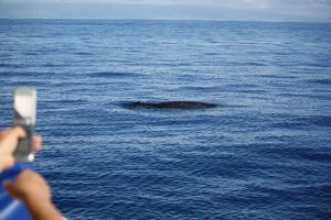 Whale Watching in Maui - photo copyright Best Kid Friendly Travel