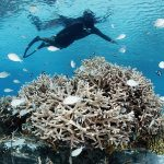 Four Seasons Hotels Make Waves with Marine Conservation Programs